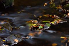 Autumn (Helena Johansson 71) Tags: autumn autumnleaf autumncolors water ndfilter nikond7500 nikon d7500
