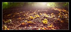 Autumn (1 of 1)-4 (ianmiddleton1) Tags: autumn bellahoustonpark leaves trees