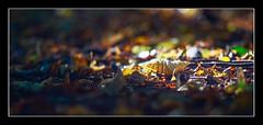 Autumn (1 of 1)-3 (ianmiddleton1) Tags: autumn bellahoustonpark leaves trees