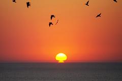 Sunrise over The Black Sea (Dumby) Tags: landscape goldensands bulgaria sunrise nature birds seascape blacksea mareaneagră sea colors