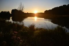 Broekpolder Vlaardingen (Hugo Sluimer) Tags: broekpolder broekpoldervlaardingen oerkoe schotsehooglander natuur nature natuurfotografie natuurfotograaf naturephotography natuurinbloei vlaardingen zuidholland holland nederland nikon nikond500 d500 sunrise zonsopkomst