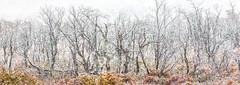 First snow (Jerzy Orzechowski) Tags: leaves patagonia landscape mountfitzroy argentina trees white orange snow