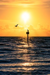 My Florida (DonMiller_ToGo) Tags: saltlife floridalife florida sunset sunsetsniper d810 seascape boats sailboat silhouettes