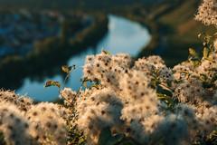 from skp-mm (skp-mm) Tags: 50m badcannstatt himmel landschaft nature skyblaublue sonnenuntergang sony sonyalpha7riv a7riv α7riv stuttgart badenwürttemberg deutschland