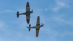 41e  Sanicole Airshow - september 15, 2019 - 1106 (Frederic_P.) Tags: sanicoleairshow sanicole airshow sigma150600contemporary p51 mustang invasionstripes ddaystripes spitfire p51mustang