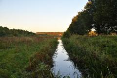 Broekpolder Vlaardingen (Hugo Sluimer) Tags: broekpolder broekpoldervlaardingen oerkoe schotsehooglander natuur nature natuurfotografie natuurfotograaf naturephotography natuurinbloei vlaardingen zuidholland holland nederland nikon nikond500 d500
