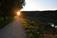 Broekpolder Vlaardingen (Hugo Sluimer) Tags: broekpolder holland nature nikon nederland natuur vlaardingen naturephotography zuidholland schotsehooglander natuurfotografie natuurfotograaf natuurinbloei nikond500 oerkoe broekpoldervlaardingen d500 sunrise zonsopkomst