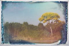 Happy Arbor Day (Thelma Gatuzzo) Tags: animalia southamerica brasil wildlife selvagem fauna matogrosso thelmagatuzzophotography wild thelmagatuzzo© americadosul mammalia portojofre naturephotography pantanal brazil america 2019