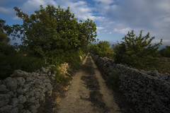 Trazzera Cugno Punteruolo (earioti) Tags: sicilia trekking backroad road country sicily hike adventure outdoors outdoor horizon sky sun sunset sony alpha photography river rocks roccia green trees tramonto strada campagna cava iblei