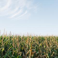 Weatherly (broodingelm) Tags: corn sky weatherly