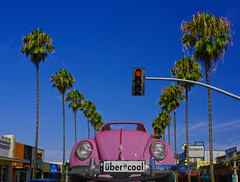 Uber Cool (oybay©) Tags: cactus scottsdale sandiego oceanbeach hostel psychedelic color colors building newportave peace vw volkswagen beetle volkswagenbeetle vwbug vwbeetle car automobile nokidding phoenixarizona 19thavenue flying airplane evelknievel herbiethelovebug herbie fly cannonshot orange rust blue bluesky opticalillusion vehicle outdoor road tree sky grass palm palmtree palmtrees surprise arizona