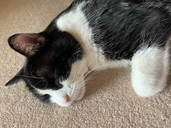 Oliver Snoozing (Mr.TinDC) Tags: oliver cats cat pet animals felines kitty cute tuxedocats sleeping pets