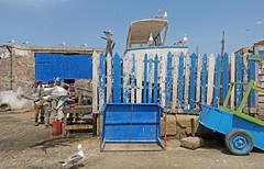 Gulls & Fishermen - Essaouira, Morocco (TravelsWithDan) Tags: candid street fishermen gulls birds city urban africa essaouria morocco blue colorful canong3x