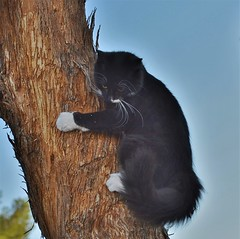 Cat up a tree (rlt64) Tags: cats pets small