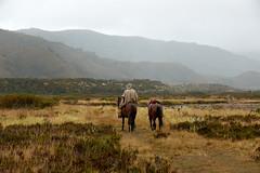 Arriero en el Páramo de Chingaza (Escipió) Tags: arriero colombia páramo chingaza parque nacional montañas nubes caballos