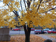 DSCN9951 (mestes76) Tags: 102718 duluth minnesota morganpark churches halloweencarnival halloween trickortreat trees leaves
