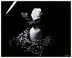 Paper Rose on Paper (Larry Buechler) Tags: caffenol crown graphic4x5large formatpaper negativestill life rodenstock ultrafine