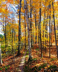 Trail through fall colors in the woods (35adventuresblog) Tags: fall autumn trail woods leaves colors forest path birch trees singletrack