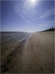 Beach (Luc V. de Zeeuw) Tags: beach cloud coast coastline sand sun tree water ģipka rojasnovads latvia
