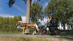 speedequo (emmapatsie) Tags: paard paardenkar koets paardenkoets damme vaart