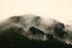 Nieblas (eitb.eus) Tags: eitbcom 27683 g1 tiemponaturaleza tiempon2019 bizkaia iurreta txaroortizdezarate