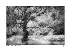 Black Down (Chalky666) Tags: trees wood woodland tree forest infrared westsussex surrey landscape art mono