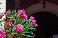 Entrée de la chapelle Constance (La Pom ) Tags: mimosas cote azur mer méditerannee var bormes les