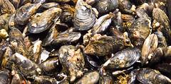 Muscheln / Mussels (schreibtnix on'n off) Tags: reisen travelling europa europe spanien spain baskenland basqueregion bilbao markt market merkatualariberea muscheln mussels olympuse5 schreibtnix