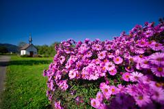Flowers and Chapel in Ebnet Freiburg (TJWest) Tags: irix 15mm blackstone pentax k1 full frame freiburg germany