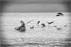 Phishing The Fisherman (channel packet) Tags: sea france monochrome birds coast fishing fisherman gulls side normandy shrimping davidhill