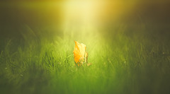 Autumn is here (Dhina A) Tags: sony a7rii ilce7rm2 a7r2 a7r minolta rf rokkorx 250mm f56 mirror reflex minolta250mmf56 md prime rokkor bokeh manualfocus autumn is here park garden