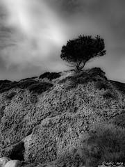 EJ_201909181833_DSCN5030 (ERIC_MRS) Tags: vert fos gulf golf port de bouc sunset sunrise coucher soleil mer sea bateau ship ciel sky clouds nuages arbre nature noir amp blanc bw black white nb