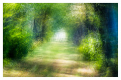 Abstract ICM (2 of 5) (ianmiddleton1) Tags: abstract icm art motion leaves trees woodland