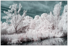365 Infrared 265 Amsterdamse bos. (PeteMartin) Tags: 365 colour forest frame infrared landscape reflection water amstelveeen netherlands