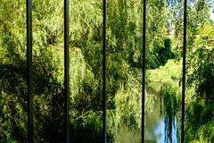 Green View (Håkan Dahlström) Tags: 2019 humlebæk modern art denmark green louisiana museum park tree krogerup capitalregionofdenmark f50 xt1 landscape uncropped 0ev normal 2019082412043341 raw 444mm iso200 ¹⁄₁₂₅sek xf1855mmf284rlmois fujifilmxt1