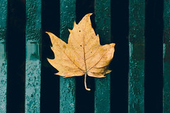 La creatividad es inventar, experimentar, crecer, tomar riesgos, romper reglas, cometer errores y divertirse. (Elena m.d.) Tags: street colors autumn macromondays nikon d5600 sigma sigma105 2019 nature