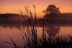 IMG_8775 (geraldtourniaire) Tags: natur nature nebel canon eos6d ef ef1285lusm 12 franken f12 mittelfranken schärfentiefe bokeh sonnenaufgang