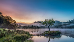 Rydal Misty Morning (petebristo) Tags: lakedistrict cumbria rydal water mist misty dew morningdew tree trees ambleside sunrise morning outdoors