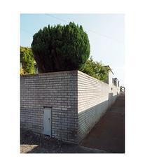 raised garden (chrisinplymouth) Tags: plymstock wall shrub brick stamfordclose trait diagonal diagx plymouth devon england uk city xg cw69x corner