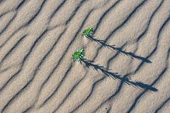 (glendamaree) Tags: minimal minimalistic sand beach nature lines abstract nikon