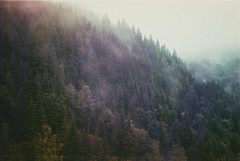 Far from land (Moesko Photography) Tags: analogue smena8m forest wood trees fog mist transylvania romania mountain outdoor nature
