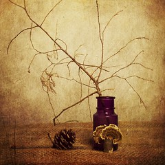 Fall Still Life (DayBreak.Images) Tags: tabletop stilllife depressionglass purple bottle twig pine cone fungus canondslr lensbabyburnside35 ringlight photoscape texture