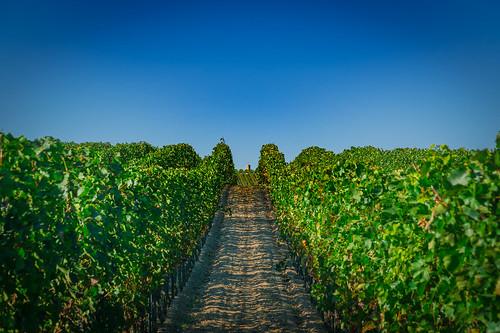 Palatinate Wine