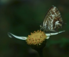 """ELEGANCE"" #photooftheday #photography #nature #paisajes #pentaxkx #macrophotography #macro #butterfly #flowers #colors #expressión #imagination #saffsunset #vilagarciadearousa #pontevedra #galicia #digitalphotography #galiciamaxica #vga_viva #disfrutarga (saffsunset) Tags: photooftheday pentaxkx macro flowers nature saffsunset galiciamaxica vgaviva imagination pontevedra disfrutargalicia colors expressión vilagarciadearousa galicia amazing digitalphotography macrophotography butterfly visitaosalnés paisajes photography"