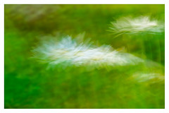 Abstract ICM (5 of 5) (ianmiddleton1) Tags: abstract icm art motion leaves trees woodland