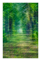 Abstract ICM (3 of 5) (ianmiddleton1) Tags: abstract icm art motion leaves trees woodland