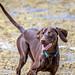 Bells Beach Dog