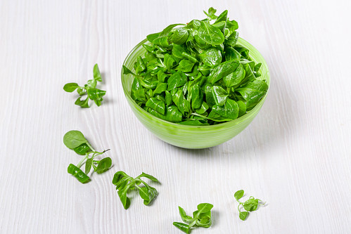 Fresh green corn sprouts in green bowl on white wooden background