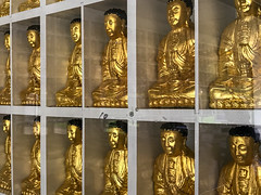 2019-09-out-west-day2-buddhas-phone-mjl-11 (Mike Legeros) Tags: buddha buddhas tenthousand 10000 ukiah ca california monastery monks