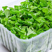 Healthy food concept. Fresh corn sprouts leaves in plastic container